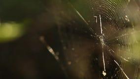 Ιστός αράχνης που τεντώνεται μεταξύ των κλάδων στη δασική κινηματογράφηση σε πρώτο πλάνο σε ένα θολωμένο πράσινο υπόβαθρο στο θερ φιλμ μικρού μήκους