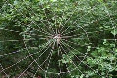 Ιστός αράχνης που υφαίνεται με τα συνθετικά νήματα στο πράσινο δασικό σύνολο Στοκ εικόνες με δικαίωμα ελεύθερης χρήσης