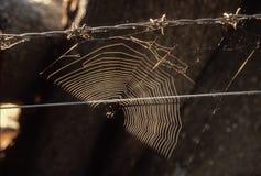 Ιστός αράχνης σε έναν οδοντωτό - φράκτης καλωδίων Στοκ Εικόνα