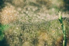 Ιστός αράχνης στα δάση Στοκ Εικόνες