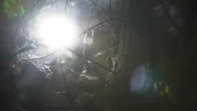 Ιστός αράχνης στη σπηλιά φιλμ μικρού μήκους