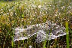 Ιστός αράχνης στη χλόη Στοκ Εικόνες
