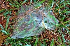 Ιστός αράχνης στη χλόη Στοκ Εικόνα