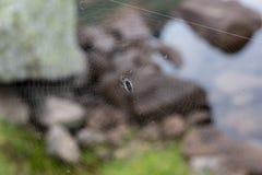 Ιστός αράχνης φρίκης τριγώνων ή Ιστός αραχνών που απομονώνεται στο μαύρο υπόβαθρο, οριζόντια φωτογραφία Στοκ Εικόνα