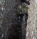 Ιστός αράχνης φρίκης τριγώνων ή Ιστός αραχνών που απομονώνεται στο μαύρο υπόβαθρο, οριζόντια φωτογραφία Στοκ φωτογραφία με δικαίωμα ελεύθερης χρήσης