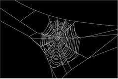 Ιστός αράχνης Στοκ Φωτογραφίες