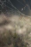 Ιστός αράχνης Στοκ φωτογραφίες με δικαίωμα ελεύθερης χρήσης
