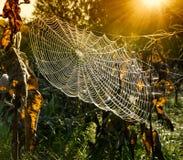 Ιστός αράχνης Στοκ φωτογραφία με δικαίωμα ελεύθερης χρήσης