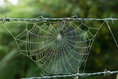 Ιστός αράχνης Στοκ εικόνες με δικαίωμα ελεύθερης χρήσης
