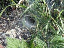 Ιστός αραχνών, αράχνη καθαρή Στοκ εικόνα με δικαίωμα ελεύθερης χρήσης