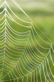 Ιστός αραχνών (ιστός αράχνης) με τις πτώσεις δροσιάς Στοκ εικόνες με δικαίωμα ελεύθερης χρήσης