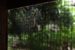 Ιστός αραχνών ιστών αράχνης στο παλαιό σκουριασμένο χαλύβδινο σύρμα παραθύρων Στοκ εικόνες με δικαίωμα ελεύθερης χρήσης