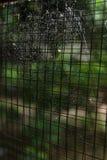 Ιστός αραχνών ιστών αράχνης στο παλαιό σκουριασμένο χαλύβδινο σύρμα παραθύρων Στοκ φωτογραφία με δικαίωμα ελεύθερης χρήσης