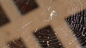 Ιστός αραχνών και μια αράχνη στο παράθυρο απόθεμα βίντεο