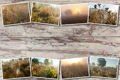 Ιστός αραχνών κολάζ στο υπόβαθρο του ήλιου Στοκ Εικόνες