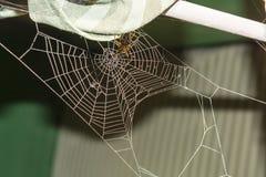Ιστός αραχνών με τη διαγώνια αράχνη Στοκ Εικόνα