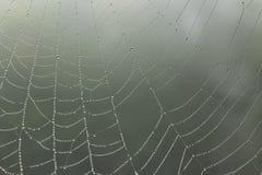 Ιστός αραχνών με τις βροχερές πτώσεις Στοκ Φωτογραφίες