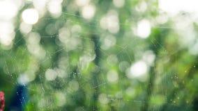 Ιστός αραχνών με τις πτώσεις δροσιάς το πρωί φιλμ μικρού μήκους