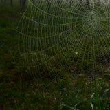 Ιστός αραχνών που καλύπτεται με τις πτώσεις της δροσιάς Στοκ Φωτογραφίες