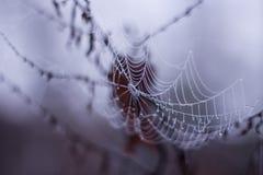 Ιστός αραχνών πρωινού δροσιάς Στοκ Εικόνες