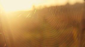 Ιστός αραχνών στην αυγή φιλμ μικρού μήκους