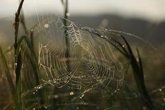 Ιστός αραχνών στις πτώσεις της δροσιάς Στοκ φωτογραφία με δικαίωμα ελεύθερης χρήσης