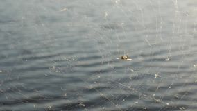 Ιστός αραχνών στο υπόβαθρο νερού φιλμ μικρού μήκους