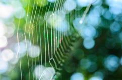 Ιστός αραχνών χωρίς την αράχνη και την ηλιοφάνεια Στοκ Φωτογραφίες