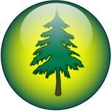 Ιστός δέντρων κουμπιών Στοκ εικόνα με δικαίωμα ελεύθερης χρήσης