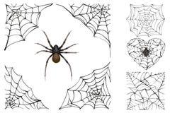 Ιστός και δηλητηριώδης αράχνη Καθορισμένο εξάρτημα αποκριών Στοκ φωτογραφία με δικαίωμα ελεύθερης χρήσης