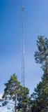 Ιστός κινητής επικοινωνίας μεταξύ των πεύκων Στοκ Φωτογραφίες