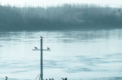 Ιστός της βάρκας με τα περιστέρια συνεδρίασης Στοκ Εικόνα