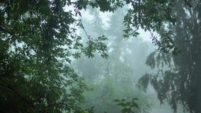 Ισχυρά μπουρίνια των ταλαντεμένος πράσινων δέντρων στη χύνοντας βροχή, μια προειδοποίηση θύελλας απόθεμα βίντεο