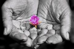Ισχυρά χέρια και λίγο λουλούδι Στοκ Φωτογραφίες