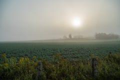Ισχυρή ομίχλη επάνω από τον τομέα Στοκ Φωτογραφία