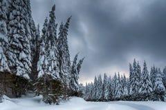 Ισχυρή χιονόπτωση πέρα από τα δέντρα στο σούρουπο Στοκ φωτογραφίες με δικαίωμα ελεύθερης χρήσης