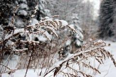 Ισχυρή χιονόπτωση στο θάμνο Στοκ φωτογραφία με δικαίωμα ελεύθερης χρήσης