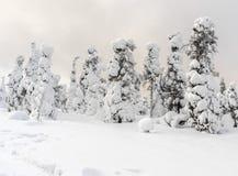 ισχυρή χιονόπτωση Στοκ Εικόνες