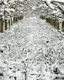 Ισχυρός κλαδευμένος οπωρώνας μήλων κάτω από το χιόνι Στοκ Εικόνα