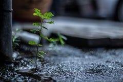 Ισχυρός λίγη ανάπτυξη ζιζανίων στο σκληρό περιβάλλον Στοκ Εικόνα