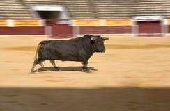 Ισχυρός ταύρος τρεξίματος Στοκ φωτογραφίες με δικαίωμα ελεύθερης χρήσης