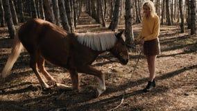 Ισχυρό καφετί και άσπρο άλογο που μασά τη χλόη κατά τη διάρκεια της κατάρτισης με το θηλυκό προπονητή σε αργή κίνηση απόθεμα βίντεο