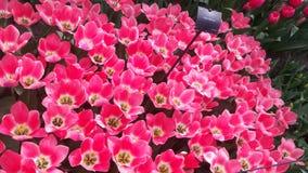 Ισχυρό χρώμα Στοκ εικόνες με δικαίωμα ελεύθερης χρήσης