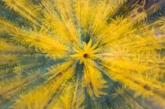 ισχύς λουλουδιών Στοκ Φωτογραφίες