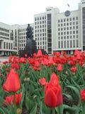 ισχύς λουλουδιών Στοκ εικόνα με δικαίωμα ελεύθερης χρήσης
