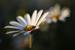 Ισχύς λουλουδιών Στοκ φωτογραφία με δικαίωμα ελεύθερης χρήσης