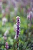 Ισχύς λουλουδιών Στοκ Εικόνα