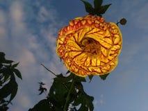 Ισχύς λουλουδιών Στοκ Εικόνες