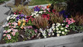Ισχύς λουλουδιών Στοκ Φωτογραφία