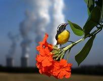 ισχύς φυτών Στοκ Φωτογραφία